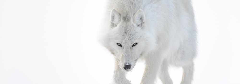 Top Nikon Ambassadors Program Section - Professional wildlife  QM12